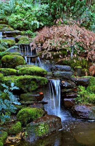 Cool calm and collected news palo alto online for Koi ponds near me