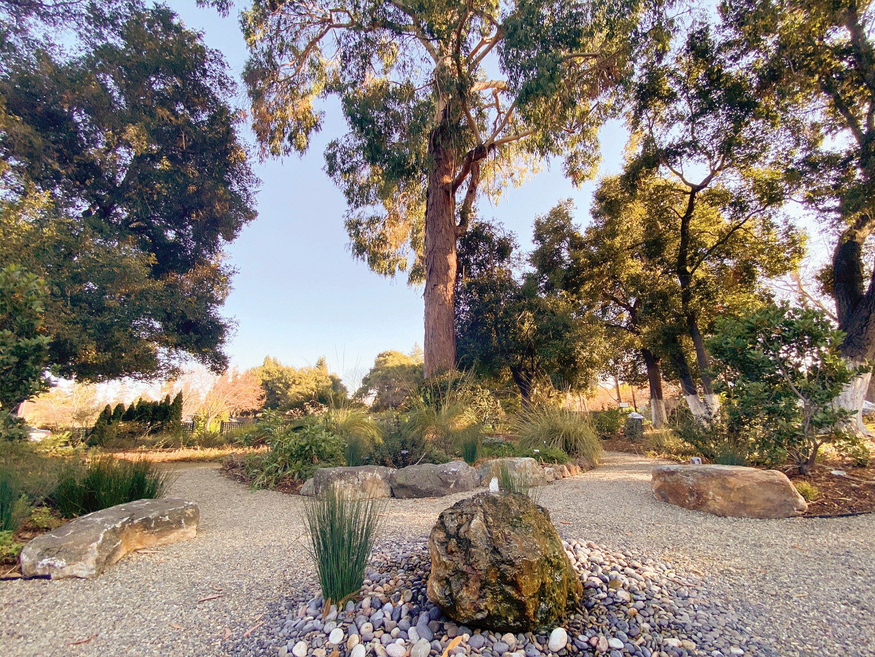 New Garden At An Old Palo Alto Landmark Highlights Sustainable